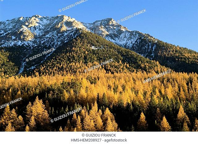 France, Hautes Alpes, the Brianconnais area in autumn, La Claree Valley, larch trees