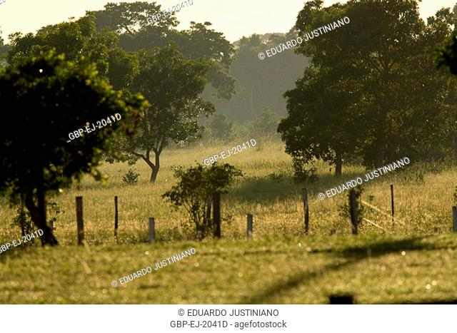 Field to the Dawn, Corumbá, Mato Grosso do Sul, Brazil