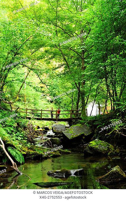 Deciduous forest. O Caurel, Lugo, Spain