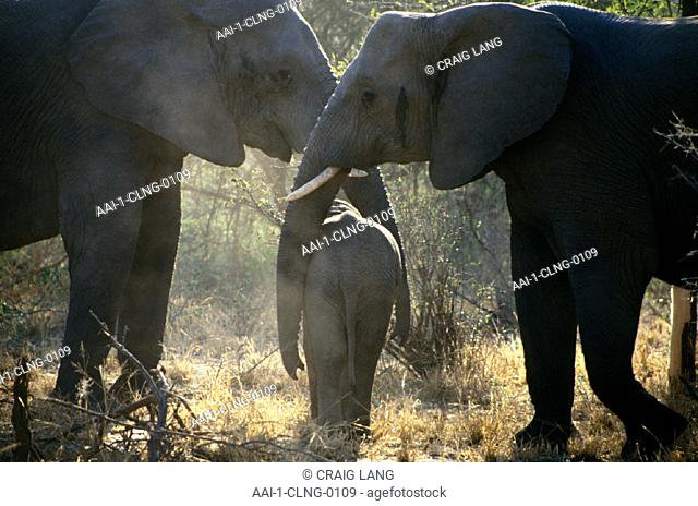 Elephant family, South Africa