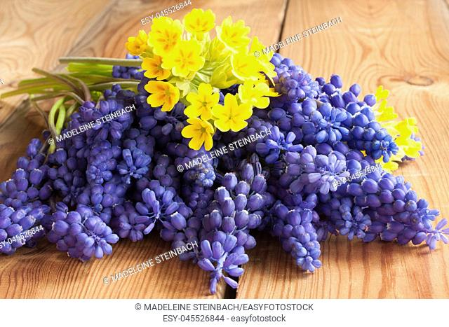 Spring flowers - muscari and primula, on a wooden table