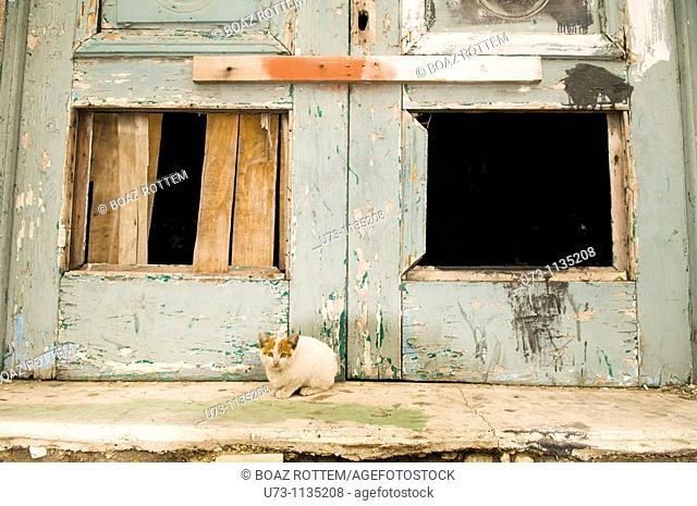 A cute kitten in an old neighborhood in Alexandria , Egypt