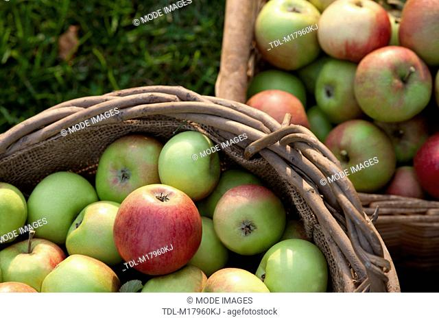 Apples in baskets, view from above