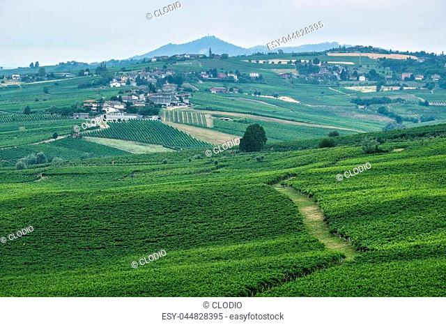 Rural landscape at summertime along the road from Ganaghello to Vicobarone (Piacenza, Emilia Romagna, Italy), in the Tidone valley. Vineyards