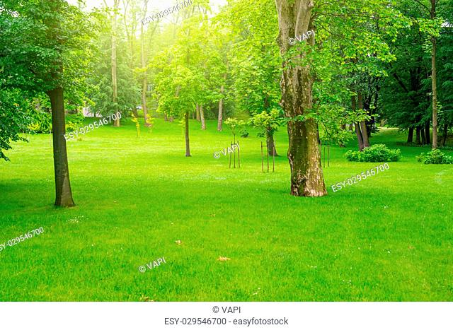 Green lawn with trees in park under sunny light