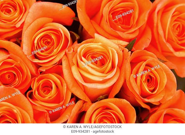 a bunch of orange roses at farmer's market