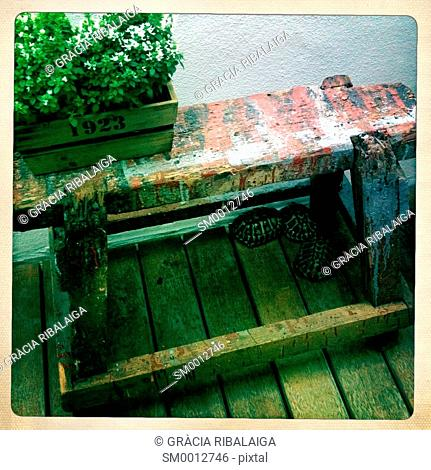 Old wooden bench in the courtyard of a house with garden plants above and below three turtles. Menorca, Balearic Islands, Espain, Europe
