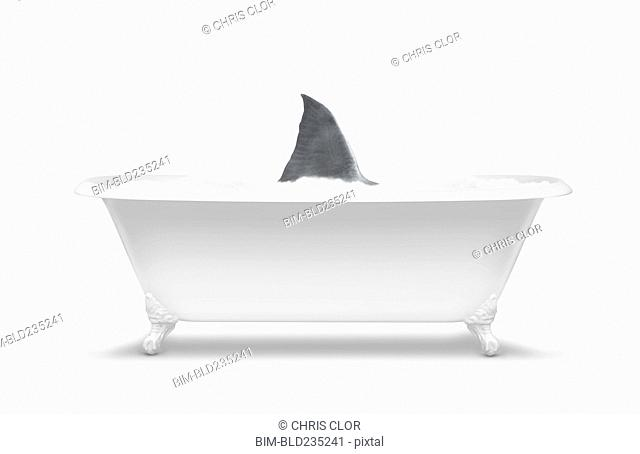 Fin of shark swimming in bathtub