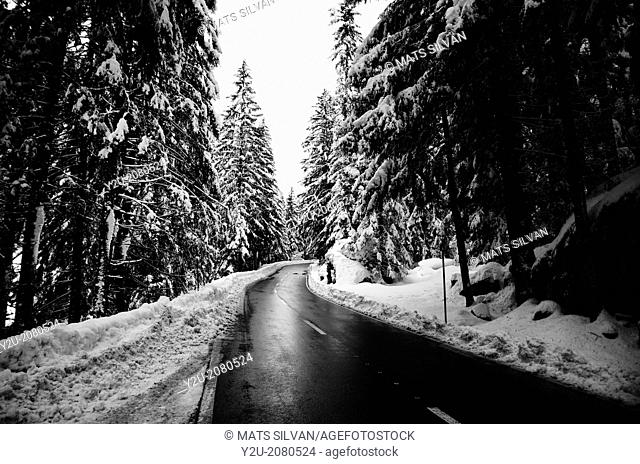 Winter road with trees and snow in ticino switzerland