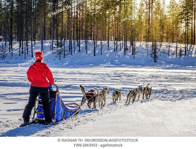 Dog sledding, Lapland, Sweden