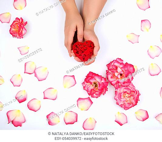 female hands hold red heart, white background with pink rose petals, top view, holiday backdrop