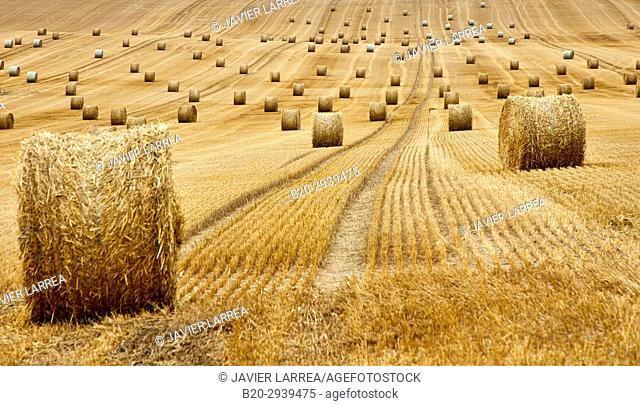 Field of cereal, bales of straw, stubble, near Auxerre, Yonne, Burgundy, Bourgogne, France, Europe