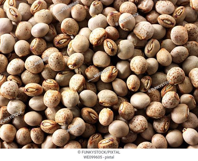 Whole Gunko Beans