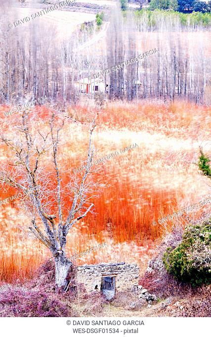 Spain, Cuenca, Wicker cultivation in Canamares in winter