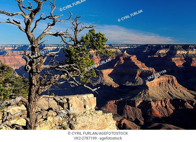 Mather Point Just After Sunrise, South Rim Grand Canyon Arizona, United States