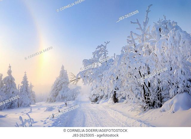 Path trought snow covered spruce trees, Fichtelberg, Oberwiesental, Erzgebirge, Saxony, Germany