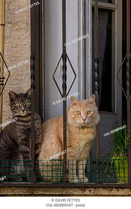 Cats sitting by doorway of home
