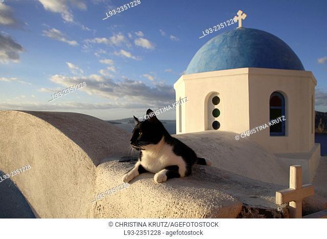 Domestic cat (Felis catus) lying in front of church in Oia, Santorini, Greece