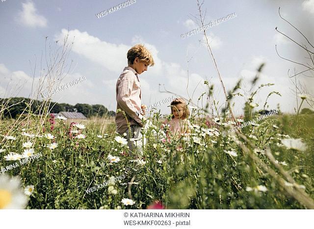Siblings picking flowers on a meadow