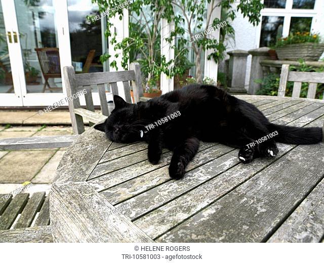 Black Cat Outside House in Garden