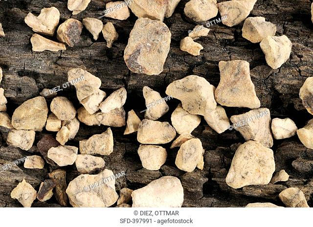 Chinese knotweed root on wooden background