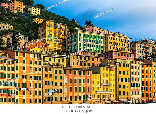 Detail of colorful hotels and apartments on hillside, Camogli, Liguria, Italy