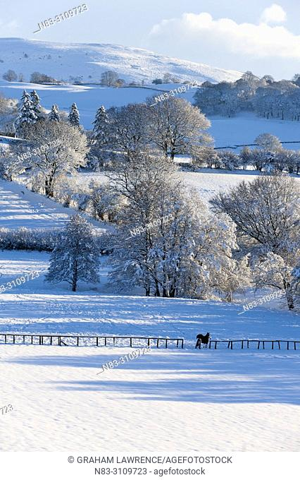 A horse stands in a wintry landscape near Builth Wells, Powys, Wales, UK