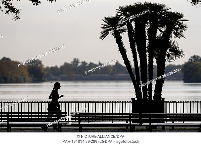 14 October 2019, Lower Saxony, Hanover: A jogger walks along the shore of the Maschsee along a palm tree. Photo: Peter Steffen/dpa