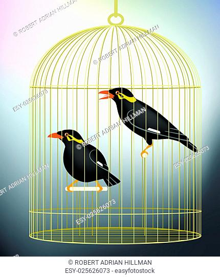 Editable vector illustration of a pair of caged hill myna birds made with gradient meshes