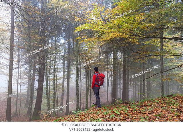 Cansiglio Forest, Fregona, Treviso, Veneto, Italy