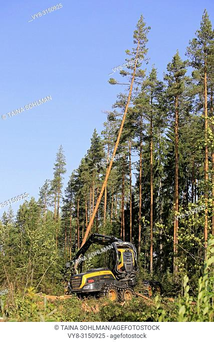 Ponsse Scorpion forest machine operator is cutting and sawing a pine tree at forest logging site on a sunny day. Jyvaskyla, Finland - August 24, 2018