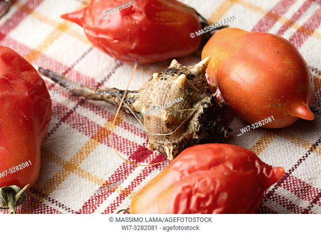 Sea snail on backround with tomatoes, close-up
