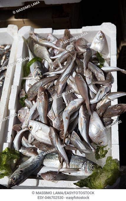 Mediterranean fish exposed in open market in Napoli