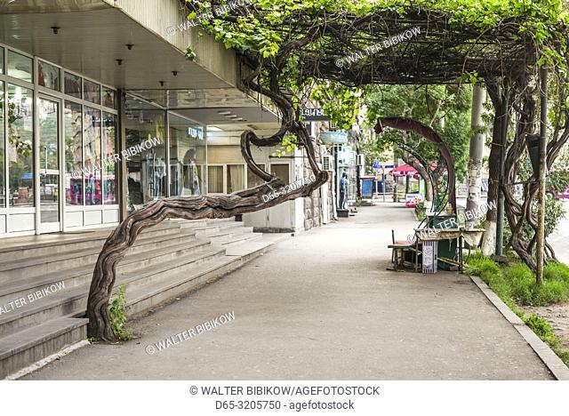 Armenia, Yerevan, tree growing out of sidewalk
