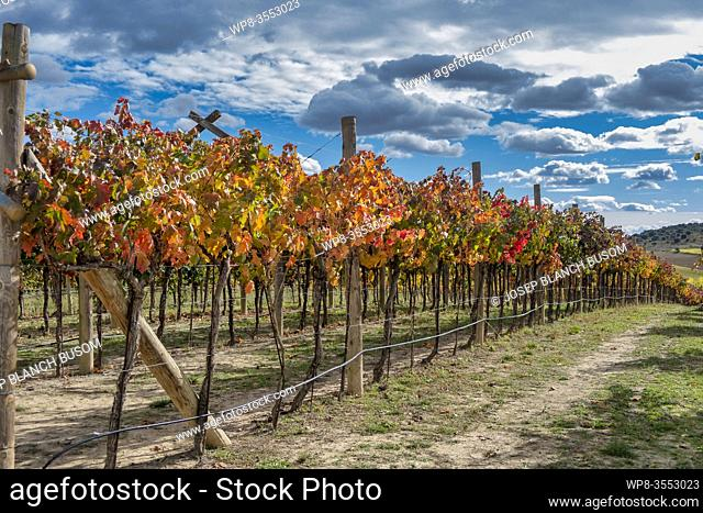 Vineyards in Autum. La Rioja. Spain