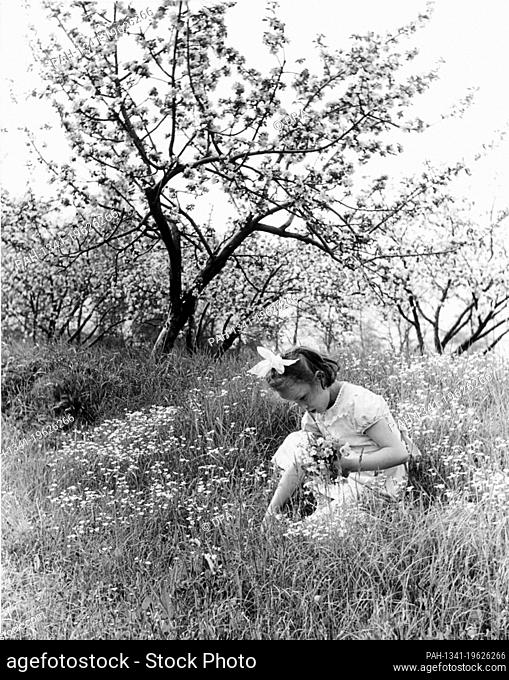 A girl sits on a blooming meadow and plucks flowers for mother's day in Spring 1960. | usage worldwide. - /Germany