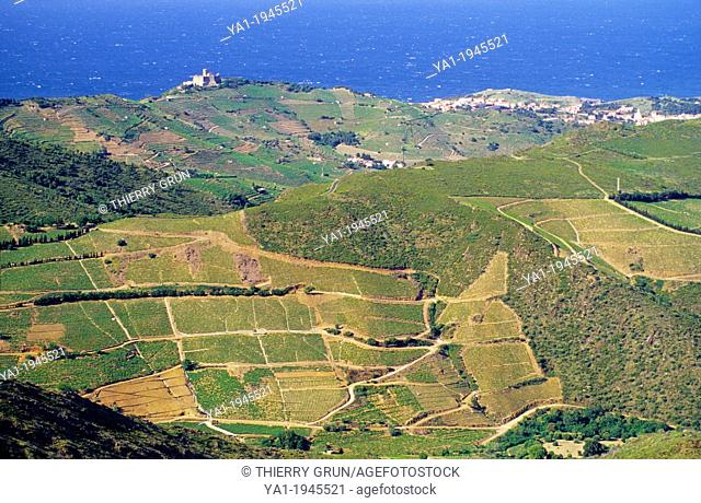Overview on vineyards of Banyuls sur mer, viewed from coll de Mollo, Cote Vermeille, Eastern Pyrenees, Languedoc-Roussillon, France