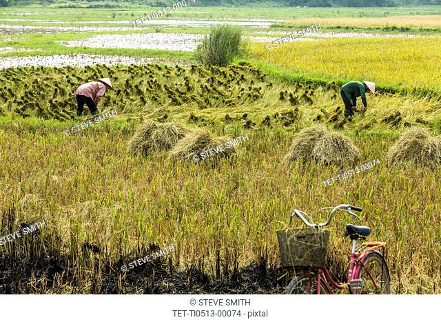 Farmers working in field in Hanoi, Vietnam