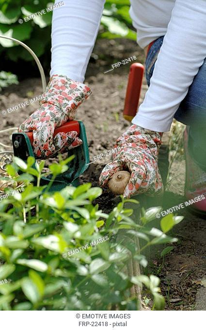 Woman planting bulb
