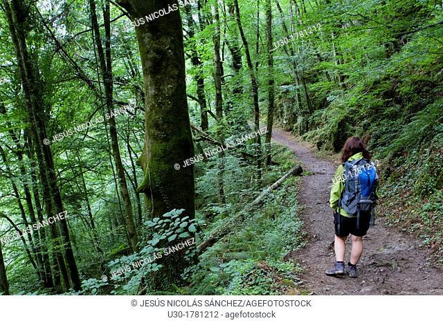 Hiker walking to Gorges d'Holzarte, near Larrau village, Atlantics Pyrenees, in Aquitaine region  France