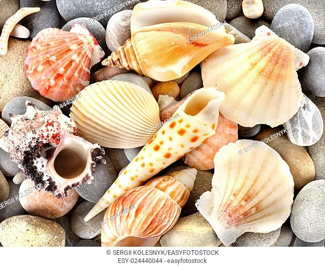 Sea shells with stone as background
