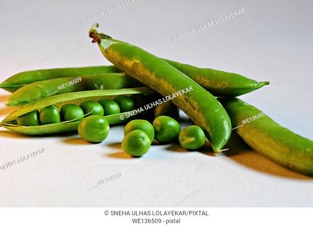 Sugar Snap Peas. indoorshot,Poona,Mahrshtra,India