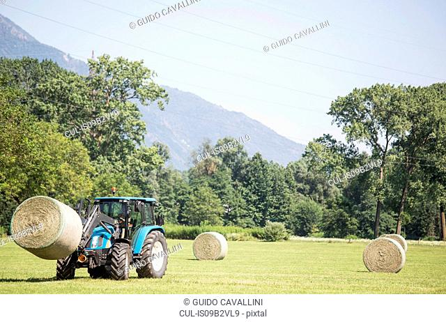 Harvesting tractor loading haystacks in field