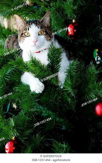 Close-up of a cat in a Christmas tree