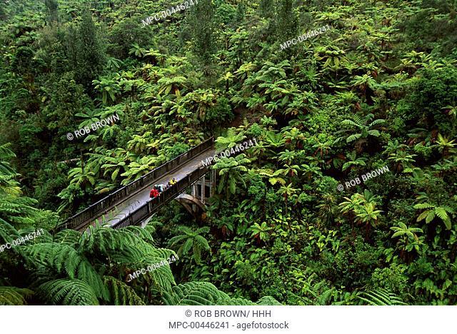 Tourists on Bridge to Nowhere, Whanganui National Park, New Zealand