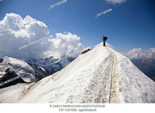 Reaching the summit of Mount Cevedale, 3769 m, Alps, Lombardy, Trentino Alto Adige, Italy