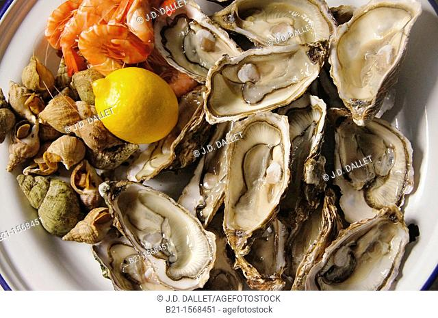 Seafood: shrimps, 'bulots' and oysters, Gironde, Aquitaine, France