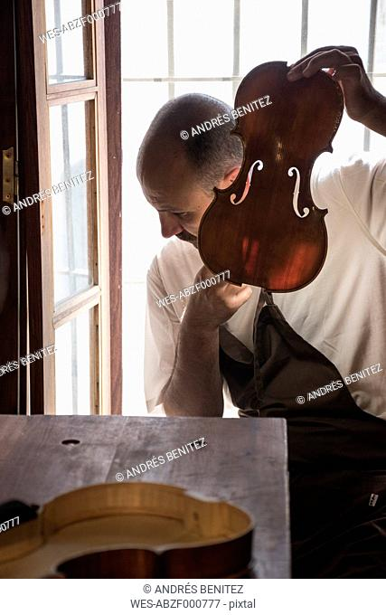 Luthier tuning the top plate of a violin in his workshop
