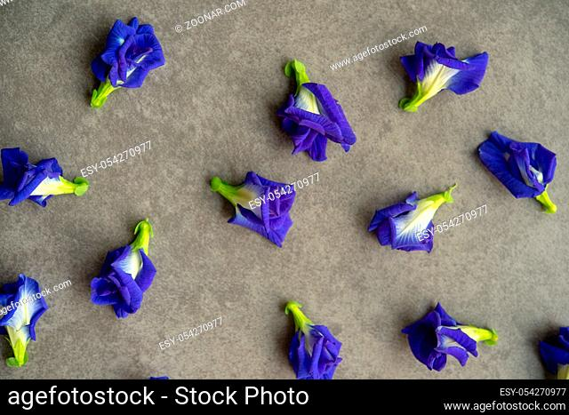 Blue butterfly pea flowers on grey background