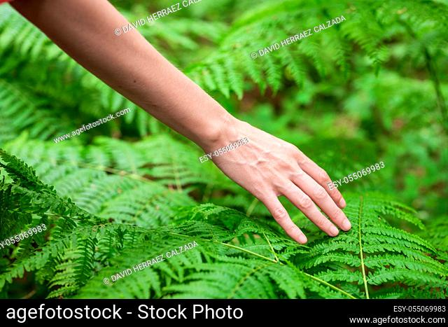 Female hand, with long graceful fingers gently touches the plant, leaves of fern. Close-up shot of unrecognizable person. High quality image